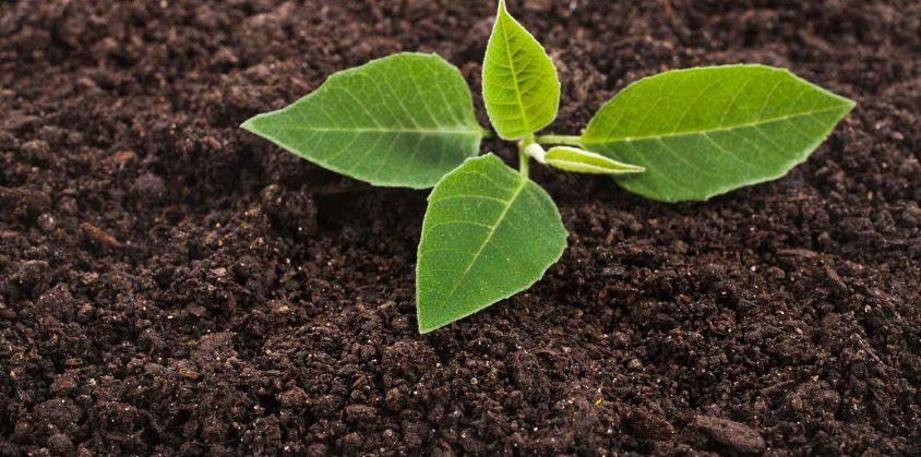 Fattoria didattica per bambini: imparare a coltivare