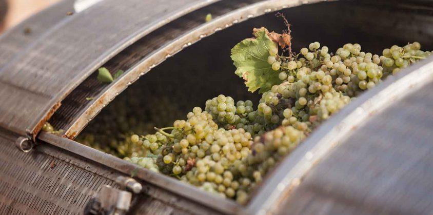 Fattoria didattica per bambini per imparare a produrre i vino